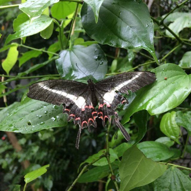 Borboletrio  Parque das Aves  Foz do Iguau Participehellip
