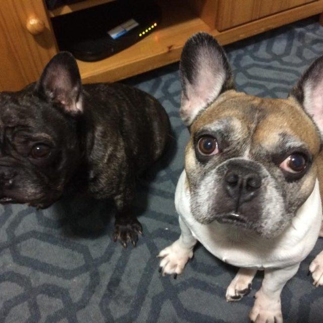 Jujuba e Bilbo  netos caninos  50anos