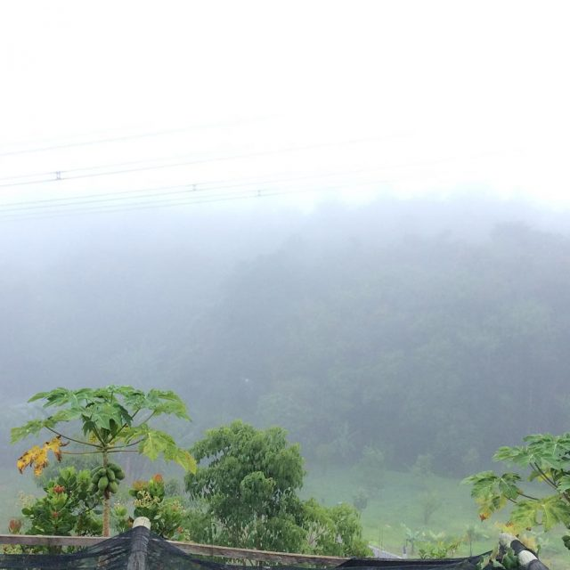 dia! Dia de neblina! Dia de ver essa belezahellip
